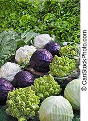 秋, 野菜, ∥において∥, a, 農夫の 市場, 立ちなさい