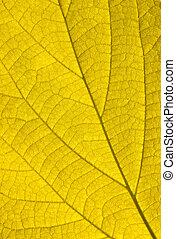 秋, 金, 葉, 背景