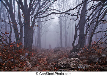 秋, 霧が深い森林