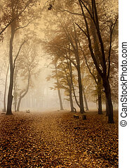 秋, 霧が濃い