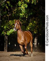 秋, 馬, 動くこと