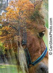 秋, 馬, 木