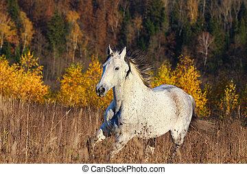 秋, 馬, 森林