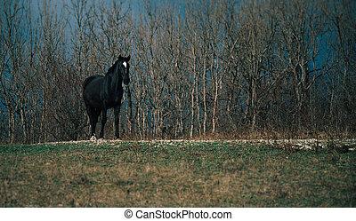 秋, 馬, 黒