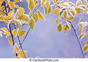 秋, colourfull, 葉, 凍りつくほどである