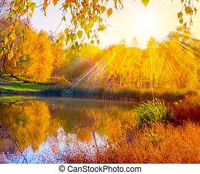 秋, fall., 公園, 秋, 日光