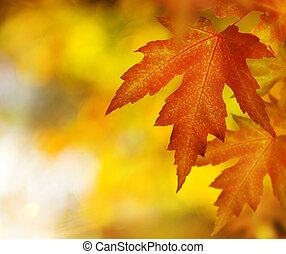 秋, fall.