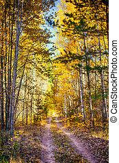 秋, forest.