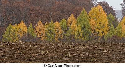 秋, forest., 構成, の, nature.