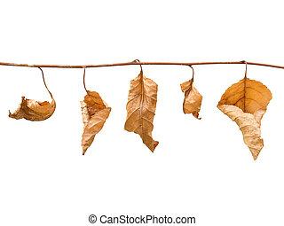 秋, leafs.