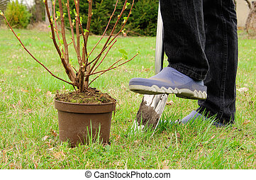 种植, a, 灌木