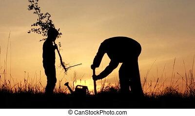 种植, spring., 父親, sunrise., 兒子, 樹。, silhouette.