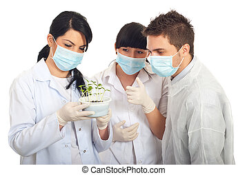 科學家, 檢查, 新, 植物, 在, 土壤