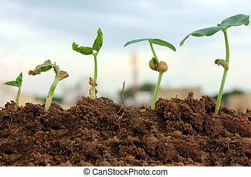 秧苗, 生長, 從, 土壤