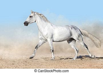 種馬, 操業, 白