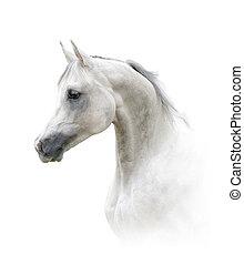 種馬, 美しい, アラビア人