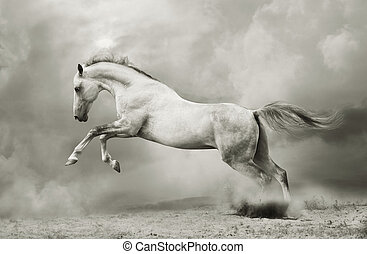 種馬, 黒, silver-white