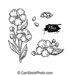 種, ベクトル, 手, 図画, superfood, 隔離された, set., 亜麻, 花
