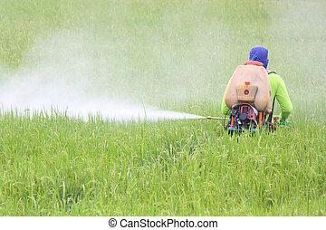 稲田, 農夫, スプレーをかける, 殺虫剤