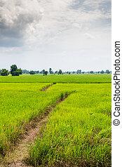 稲田, 都市でない, 緑, タイ