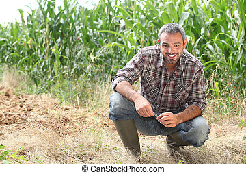 穀物, ひざまずく, 農夫