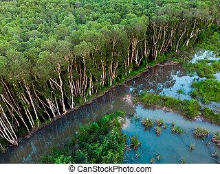 空中写真, の, ∥, ゴムの木, プランテーション