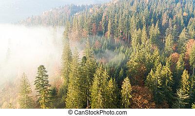 空中写真, の, ∥, 山, ∥で∥, a, 朝, 霧