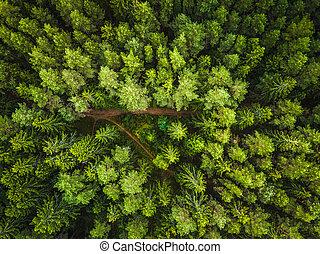 空中写真, の, ∥, 森林