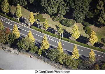 空中写真, の, yoyogi 公園, 区域