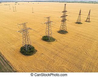 空中写真, 上に, ∥, 農業, fields., 黄色, 小麦, そして, 送電線