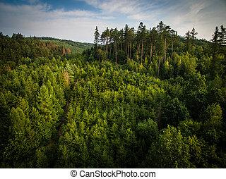 空中的觀點, ......的, 巨大, 森林