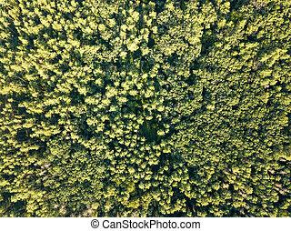 空気の 写真, の, a, 夏の日, 上に, 緑の葉群, forest., 自然, バックグラウンド。, 環境の 保存,...