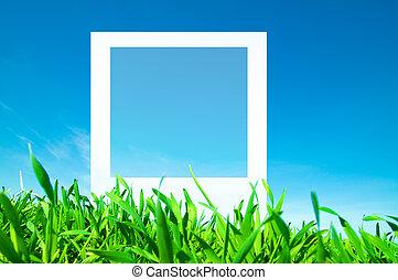 空白, 相片, 上, 自然, 背景