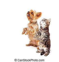 空間, 懇求, 狗, 一起, 小貓, 模仿