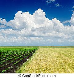 空, 上に, 農業, 曇り, フィールド