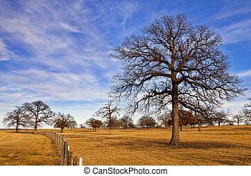 空, 冬, テキサス