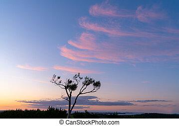 空, 形成, 雲, ピンク, 青, 毛状突起