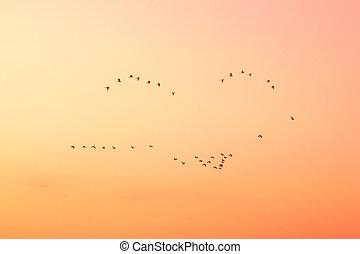 空, 鳥, 日没
