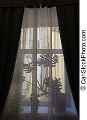 窓を通して, 打撃, flower., カーテン