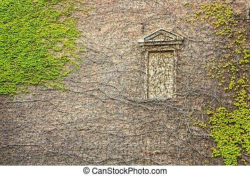 窓, 囲まれた, によって, はうこと, ツタ, 植物