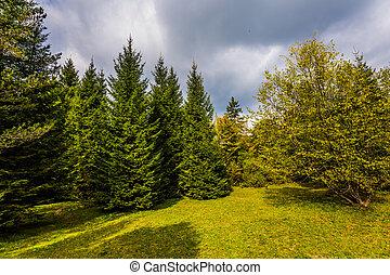 端, 森林, 絵のよう