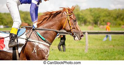 競争, 肖像画, の上, 馬, 終わり