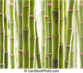 竹子, 叢林