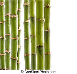 竹子, 背景