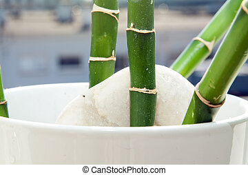竹, はり付く