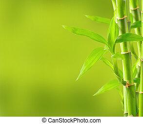 竹, コピー, 背景, スペース