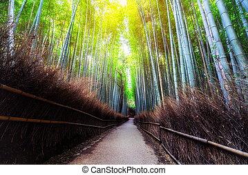 竹, 京都, 場所, 日本, 有名, 森林, arashiyama