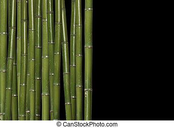 竹, 懸命に