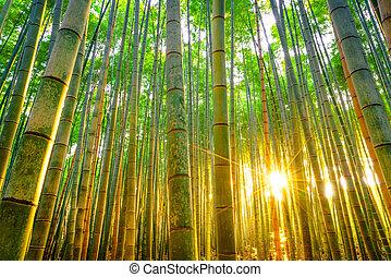 竹, 日当たりが良い, 森林, 朝