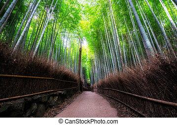竹, 日本, 森林, 場所, arashiyama, 有名, 京都